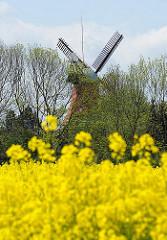 Reitbrooker Mühle - Wahrzeichen des Stadtteils - Feld mit blühendem gelben Raps im Vordergrund.