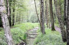 Fotos aus dem Naturschutzgebiet Raakmoor - Birken stehen längsseits des Raakmoorgrabens; einer der Stämme ist über den Wasserlauf gefallen. Fotos aus den Hamburger Stadtteilen - Bilder aus Hamburg Hummelsbüttel.