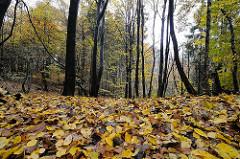 Mit Herbstlaub dicht bedeckter Waldboden im Saselbek Wald.