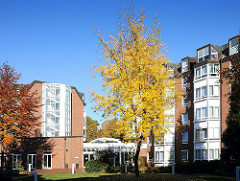 Herbstbaum in der Grünanlage der Alstertaler Parkresidenz.