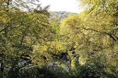Herbst an der Alster - Laubbäume mit Herbstfärbung am Ufer des Flusses.