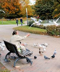 Ein Parkbesucher sitzt auf einer Parkbank in den Wallanlagen / Planten un Blomen füttert die Möwen, Tauben und eine Ente. Im Hintergrund Herbstfarben der Bäume.