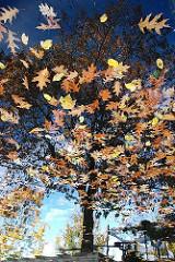 Buntes Herbstlaub schwimmt im Wasser - es spiegelt sich ein Baum an der Wasseroberfläche - Herbstszene aus Hamburg Planten un Blomen, im Stadtteil St. Pauli.