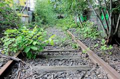 Stillgelegtes Gleis der Hafenbahn in der Hamburger Hafencity - Wildkraut überwuchert die Gleise, Sträucher und junge Bäume wachsen im Gleisbett.