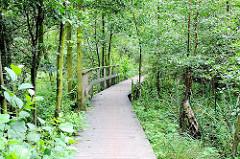 Weg mit Brettern gesichter durch das Naturschutzgebiet Raakmoor - Niedermoorflächen in Hamburg.