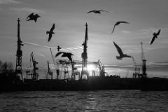 Möwen über der Elbe - Hafenkräne der Werft Blohm & Voss im Hamburger Hafen.
