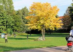Herbstsonne in Hamburg Eppendorf - Baum mit gelben Blättern im Eppendorfer Park.