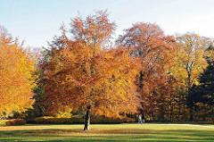 Buchen und Eichen im Herbst - herbstlich gefärbtes Laub im Poppenbüttler Hohenbuchen Park.