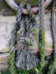 Detail eines verrosteten Eisenrings mit Leine an einer Kaimauer im Hamburger Hafengebiet; Relikte  / Überbleibsel vom alten Hamburger Hafen.