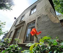 Fassade eines Hauses an der Elbtreppe - blühende Rose - Neubau am Elbufer im Hintergrund.