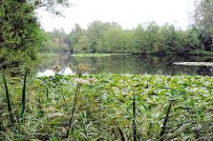 Raakmoorteich mit Seerosen und Baumbestand am Seeufer im Naturschutzgebiet Raakmoor in Hummelsbüttel, Stadtteil im Bezirk Hamburg Wandsbek.