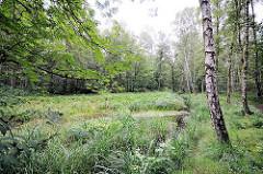 Naturschutzgebiet Raakmoor - Wassergraben im Grünpflanzen, Birken wachsen am Rande des Feuchtgebiets - Bilder aus Hamburg Hummelsbüttel.