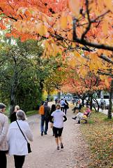 Herbstlich gefärbte Blätter der Japanischen Zierkirschen am Alsterufer in Hamburg Rotherbaum. SpaziergängerInnen und Jogger auf dem Fussweg.
