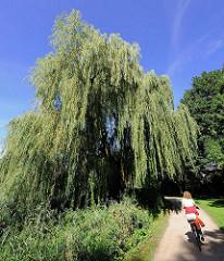 Weide am Ufer des Kupfermühlenteichs in Hamburg Farmsen-Berne; Radfahrerin auf dem Wanderweg.
