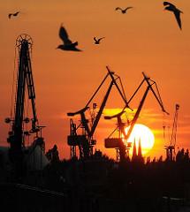 Untergehende Sonne hinter Werfkränen - Silhouetten der Kräne von Blohm + Voss -  Möwen im roten Abendhimmel.