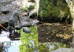 Der Hund einer Spaziergängerin trinkt aus der Alsterquelle in Rhen / Henstedt-Ulzburg.