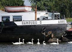 Heck eines Binnenschiffs am Liegeplatz in der Billwerder Bucht - Schwäne im Hamburger Hafen.