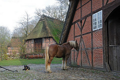 Pferd und Schäferhund im Volksdorfer Museumsdorf - Fachwerkscheune mit Reet gedeckt.