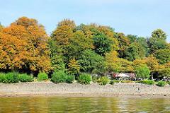 Herbstbäume am Ufer der Elbe in Hamburg Othmarschen - am Elbwanderweg ein Café mit Blick auf den Fluss.