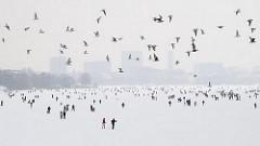 Alstervergnügen im Winter - die Menschen gehen auf der zugefrorenen Alster spazieren - im Hintergrund Gebäude von Hamburg St. Georg; ein Schwarm Möwen fliegt über den zugeforenen See.