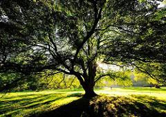Baum im Hirschpark - Bilder aus dem Hamburger Stadtteil Nienstedten.