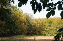 Wohldorfer Wald - Bäum mit Herbstlaub an einer Wiese.