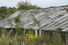 ungenutztes Gewaechshaus - überwuchertes Glashaus mit zerstörten Scheiben.