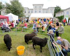 Biohof Gut Wulksfelde - Bauernmarkt. Schafe auf der Wiese - Gäste des Hoffestes sitzen an Tischen; im Hintergrund das Gutsgebäude.