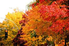 Strassenbäume in Herbstfarben - Ampel mit Rotlicht; Bilder aus Hamburg Barmbek Süd.