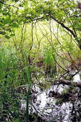 Verwachsener Wassergraben im Naturschutzgebiet Raakmoor - moorastiger Boden; moderige Äste im Wasser. Bilder aus dem Hamburger Stadtteil Hummelsbüttel, Naturschutzgebiet Raakmoor.