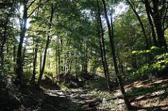 Bergstedter Naturschutgebiet Hainesch Iland