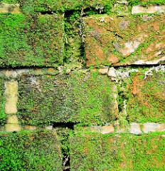 Ziegelmauer / Kaimauer mit Moos bewachsen - Relikte / Überbleibsel vom alten Hamburger Hafen.