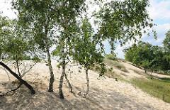 Rand der Boberger Düne - Hamburg einzige Wanderdüne - Birken wachsen im Sand.