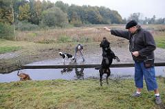 Hundeauslaufplatz Eidelstedter Muehlenau Bach - spielende Hunde am Wasser.