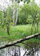 Wiese am Wasser, umgestürzter Birkenstamm; Feuchtgebiet im Hamburger Naturschutzgebiet Raakmoor. Bilder aus Hamburg Hummelsbüttel.