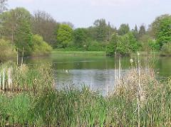 Bilder aus dem Hamburger Stadtteil Langenhorn - Rückhaltebecken der Tarpenbek - Gräser wachsen am Ufer des Gewässers.