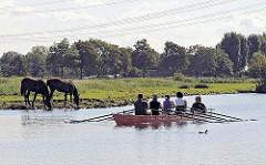 Ein Vierer-Ruderboot mit Steuermann auf der Dove-Elbe - zwei Pferde stehen am Flussufer und saufen.