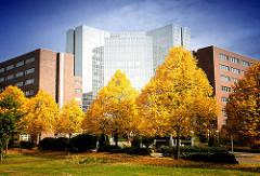 Alstercity - Bürogebäude im Hamburger Stadtteil Barmbek Süd - Hamburg im Herbst - Bäume mit goldenen Herbstblättern.