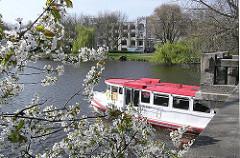 Alsterdampfer unter der Langen Zug Brücke - blühender Kirschbaum an der Herbert Weichmann Strasse - im Hintergrund die Strasse Bellevue in Hamburg Winterhude.
