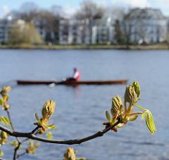 Frühling in Hamburg - Kastanienblätter an der Alster, Ruderboot