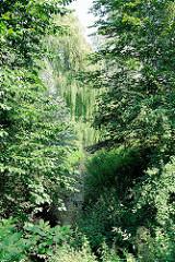 Bach Osterbek - Bäume am Ufer Höhe Adlerstrasse in Hamburg Barmbek Nord.