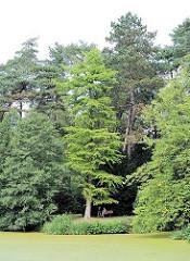 Parkfriedhof Hamburg Ohlsdorf - hohe Bäume an einem kleinen See - Ruhebank mit Parkbesucherinnen im Schatten.