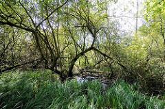 Fotos aus dem Hamburger Naturschutzgebiet Stellmoorer Tunneltal. Feuchtbiotop mit Schilf und Bäumen im Wasser.