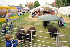 Biohof Gut Wulksfelde - Bauernmarkt. Schafe auf der Wiese; Metallzaun - Kinder füttern die Tiere.