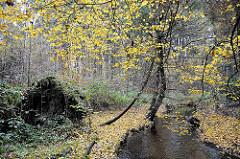 Lauf der Saselbek - Herbstlaub am Bachufer in Hamburg Sasel.