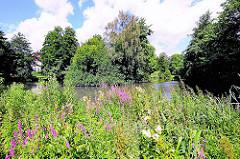 Rückhaltebecken im Von Eicken Park - blühende Wildkräuter am Ufer des Beckens und der Schillingsbek.