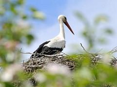 Storch im Nest in Hamburg Allermöhe.