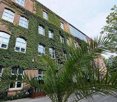 historisches Industriegebäude Hamburg- Harburg - Blohmstrasse - Klinkerfassade mit Efeu bewachsen.