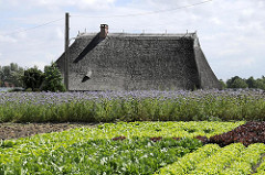 Feld mit Salat - Reetdach eines Bauernhauses im Stadtteil Spadenland.
