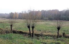 Blick auf die Volksdorfer Teichwiesen - Herbstwald Hintergrund, junge Kopfweiden am Lauf der Saselbek.
